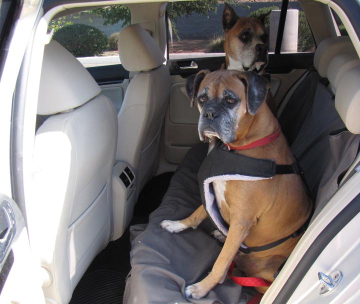 big-pet-safety